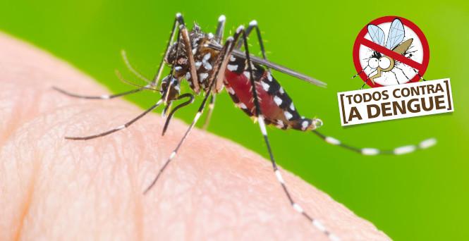 9a264e1188b5b Estação quente e chuvosa é o período do ano em que se observa maior risco de  proliferação do mosquito!